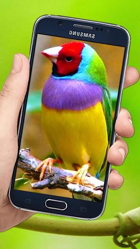 Download Flying Birds 3d Live Wallpaper Free For Android Flying Birds 3d Live Wallpaper Apk Download Steprimo Com