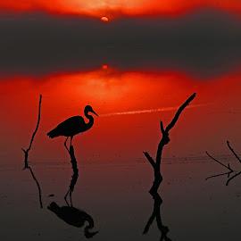 Magical Florida Sunrise! by Anthony Goldman - Landscapes Sunsets & Sunrises ( fog., sunrise, nature, reflections, florida, colrs, lakeland, clouds, landsacape, waterscape, bird, heron, wildlife,  )