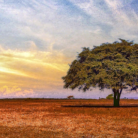 Lonely tree in baluran park by Wahid Hasyim - Landscapes Forests ( tree, forest, landscape,  )