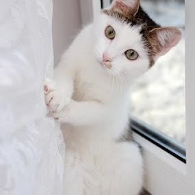 Playful by Nadezda Tarasova - Animals - Cats Portraits ( cat )