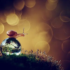 snail5_3.jpg