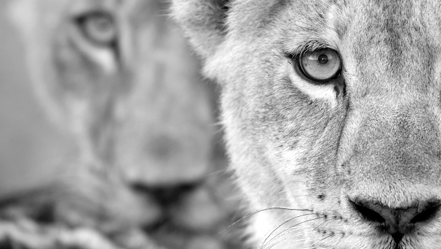 White Lioness technologies - Google+