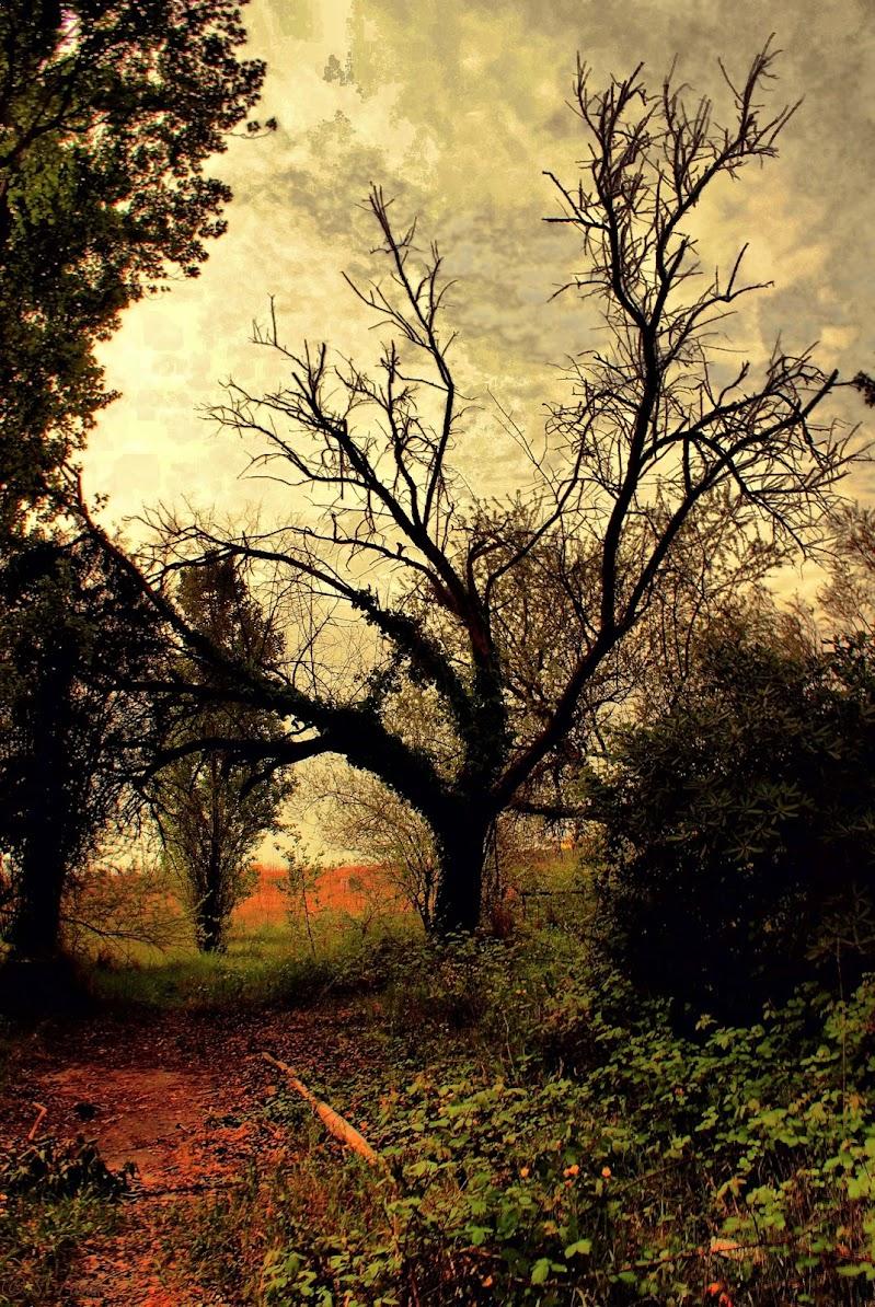 L'albero degli elfi di S. Fasan