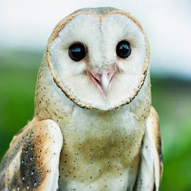 by R De Leon - Novices Only Wildlife