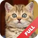 Cats sounds FULL icon