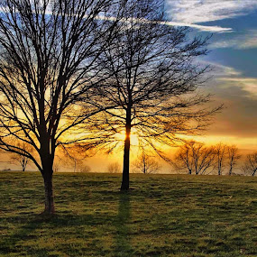 Sunset at the park by Jim Dawson - Novices Only Landscapes ( #landscape, #trees, #shadows#nikon, #spring, #sunset )