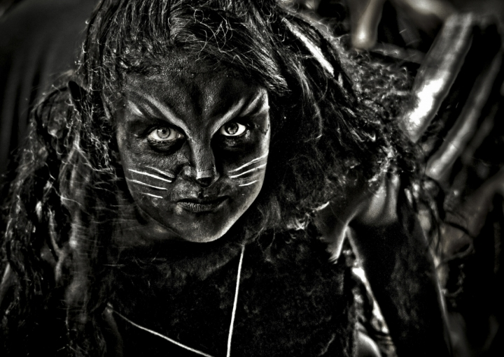 Gattina pericolosa di marco pardi photo