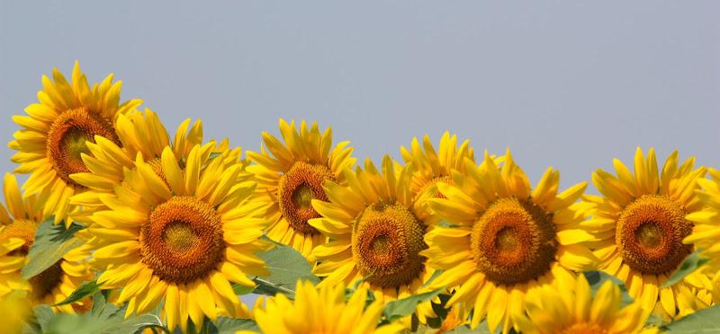 gialli in fila  di Foxma