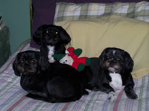 Photo: Sampson, Beatle Bailey and Maddyson