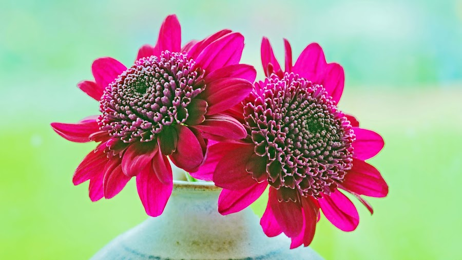 Two Flowers in a Pot by Susan Edwards - Nature Up Close Flowers - 2011-2013 ( magenta, pink, flowers )