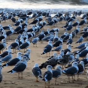 Meeting by Aparajita Saha - Animals Birds ( waves, ocean, beach, birds, flock )