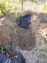 Photo: ástam egy gödröt, kibéleltem hulladék zacskókkal, hogy kívül tartsa a vakondokat, bár gyanítom hogy ezzel csak magamat nyugtatom. mindenesetre lesz a giliszta telelőnek egy ilyen fólia szerű alja.