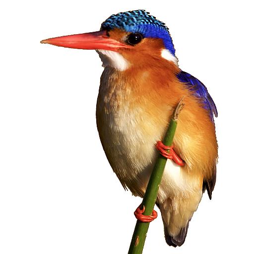 SmartSearch Birds of Kruger National Park