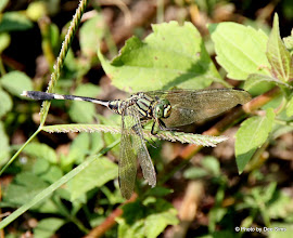 Photo: Day 210 - Dragonfly