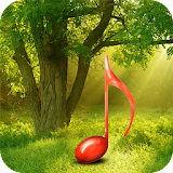 Sounds of nature:Relax Forest free download apk