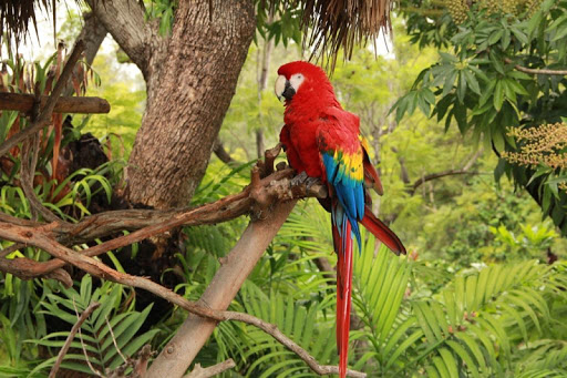 Tropical Birds Wallpapers