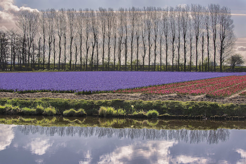 Primavera Olandese di Buttero59