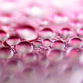 ID: Water Dews by Shibalik Choudhury - Abstract Water Drops & Splashes ( drop, macro, pink, bubble, closeup, droplets, tiny, abstract, water )