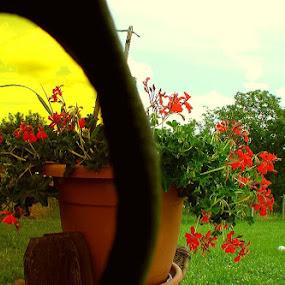 Two Flower Worlds by Nat Bolfan-Stosic - Flowers Flower Gardens
