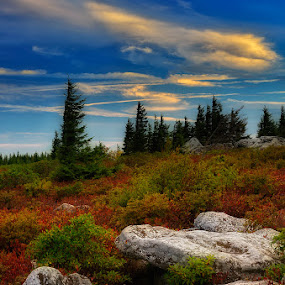Peacefull morning  by Ernie Page - Landscapes Mountains & Hills ( bear rocks, national forest, west virginia, dolly sods, dolly sods wilderness area )