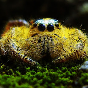 I'm Not A Monster by Ardika Septyawan - Animals Insects & Spiders ( spider )