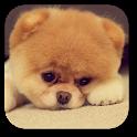 Q Puppy Live Wallpaper icon