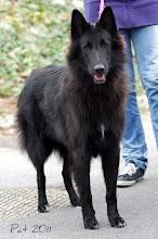 Photo: World Dog Show Paris 2011