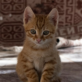 ... by Hale Yeşiloğlu - Animals - Cats Kittens ( cat, animal, kittens, cute, kitty,  )