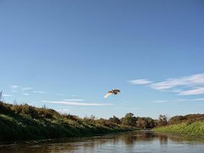 Photo: latają to z lewej...
