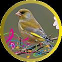 Oiseau Verdier icon