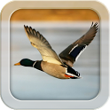 My Duck Log icon