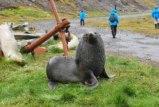 Photo: Fur Seal