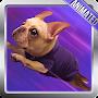 Pug Live Wallpaper