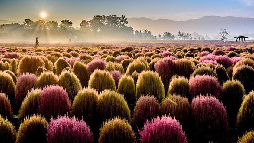 Imagen de Corea del Sur. Foto de Fitur.