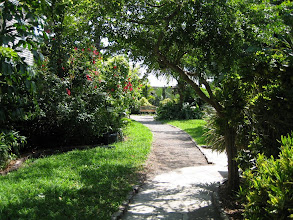 Photo: The garden of Hemingway House