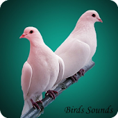 80 Birds Sounds and ringtone