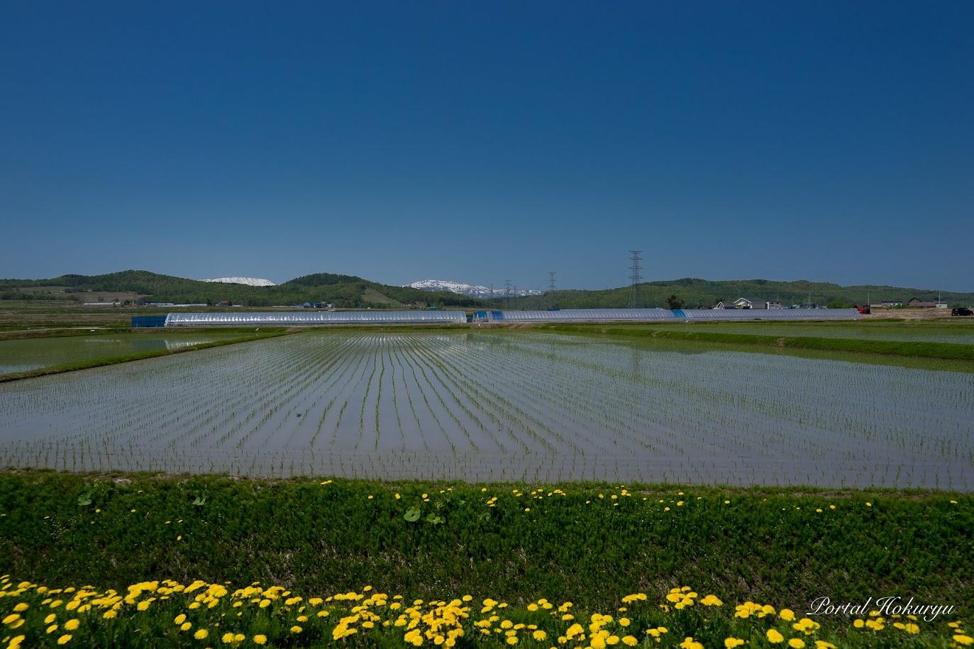 生命育む神聖なる稲たち