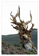 Photo: Eastern Sierras-20120715-303