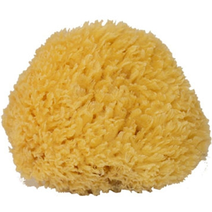 Natursvamp 8-10 cm