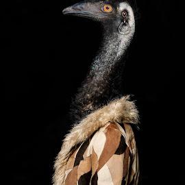 Eva the Emu by Michal Challa Viljoen - Digital Art Animals ( jacket, person, zoo, advertising, edit, emu, brown, composite, photography, animal, photoshop,  )