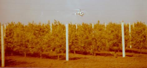 Photo: Viininviljelyä Moldaviassa 1976