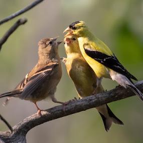 by Kym George - Animals Birds