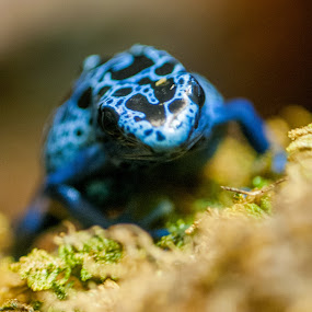 Atlanta 4 by Russ Crane - Animals Amphibians ( gerogia, frog, aquarium, amphibian, atlanta )