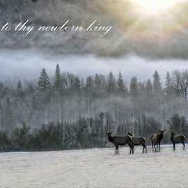 Glory to Thy King by Twin Wranglers Baker - Typography Quotes & Sentences ( winter, montana, elk, wildlife, christmas card, Christmas, card, Santa, Santa Claus, holiday, holidays, season, Advent,  )