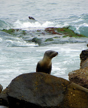 Photo: A seal pup climbing on rocks