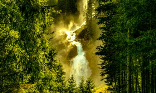 A képen fa, kültéri, erdő, növény látható  Automatikusan generált leírás