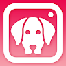 download DogCam - Dog Selfie Filters and Camera apk