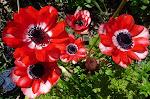 Flower Growers, Wholesale Flower Market, Fresh Flowers bulk