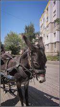 Photo: Măgărușul lui Ianoș - de pe  Str. Rapsodiei - 2017.08.03