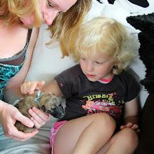 Photo: buurmeisje Anna is fan van de pups ♥